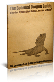 Download The Bearded Dragon Guide